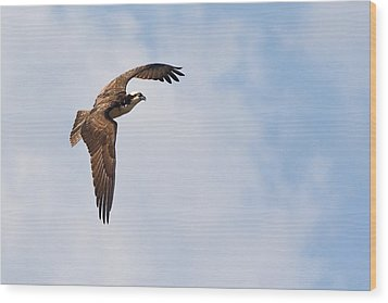 Wood Print featuring the photograph Osprey In Flight by Bob Decker