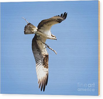 Wood Print featuring the photograph Osprey In Flight by Ricky L Jones