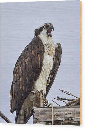 Osprey On Its Perch Wood Print by Eddie Yerkish