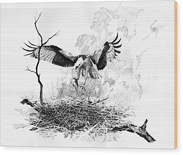 Osprey Wood Print by Paul Illian