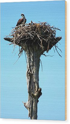 Osprey Point Wood Print by Karen Wiles