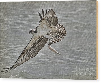 Osprey With Breakfast Wood Print by Deborah Benoit