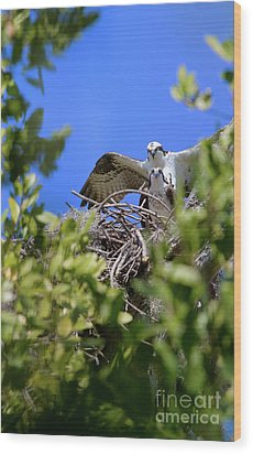 Wood Print featuring the photograph Ospreys by Arthur Dodd