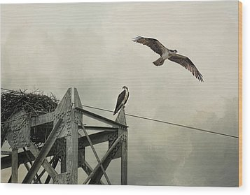 Ospreys At Pickwick Wood Print by Jai Johnson
