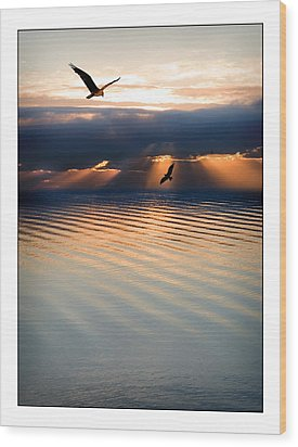 Ospreys Wood Print