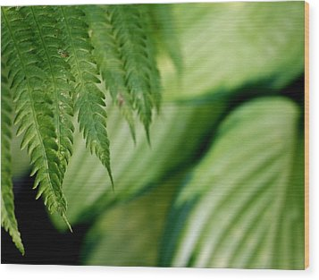 Wood Print featuring the photograph Ostrich Fern And Hosta by Diane Merkle
