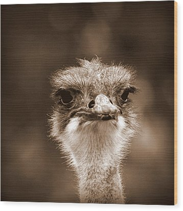 Ostrich In Sepia Wood Print by Tam Graff