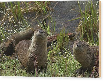 Otters Wood Print by Steve Stuller