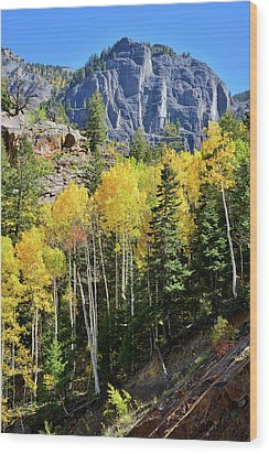 Wood Print featuring the photograph Ouray Aspens by Ray Mathis