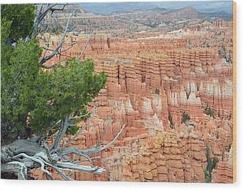 Wood Print featuring the photograph Overlooking Bryce Canyon by Bruce Gourley