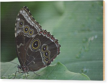 Owl Butterfly Wood Print by Linda Geiger