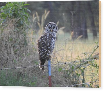 Owl Cherish This Moment Forever Wood Print by Roxanne Raber