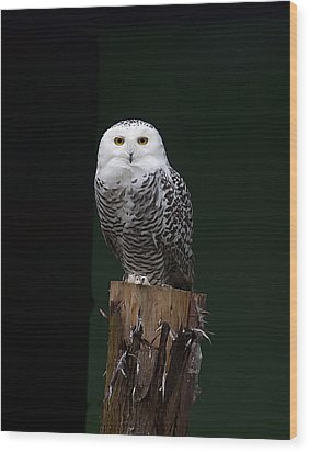 Wood Print featuring the photograph Owl by Gouzel -