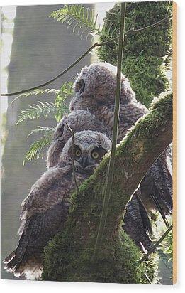 Owl Morning Wood Print