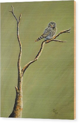 Owl On A Branch Wood Print