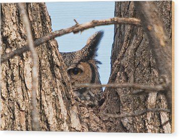 Owl Peek Wood Print by Steve Stuller