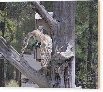Owl Takeoff Wood Print