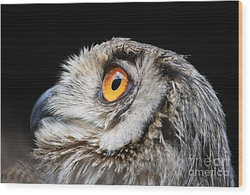 Owl The Grand-duc Wood Print by Mary-Lee Sanders