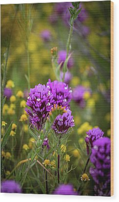 Wood Print featuring the photograph Owl's Clover by Peter Tellone