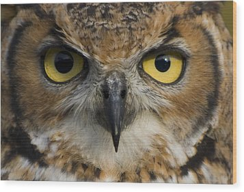 Owls Eyes Wood Print by Pixie Copley