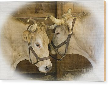 Oxen Team Wood Print by Kevin Fortier