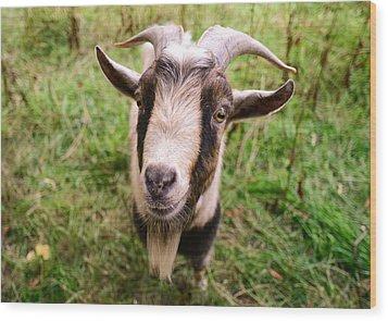 Oxford Goat Wood Print