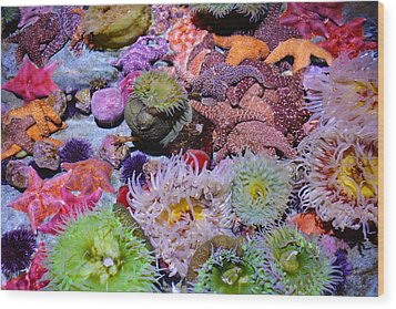 Pacific Ocean Reef Wood Print by Kyle Hanson