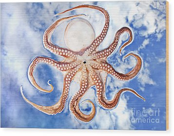 Pacific Octopus Wood Print by Mike Raabe