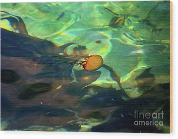 Wood Print featuring the photograph Pacific Sea Nettle Jellyfish by Susan Wiedmann