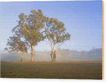 Paddock Sunrise Wood Print by Mike  Dawson
