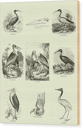 Page From The Pictorial Museum Of Animated Nature  Wood Print