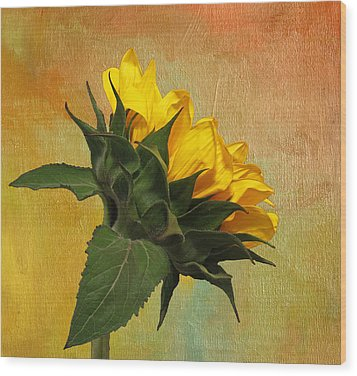 Painted Golden Beauty Wood Print by Judy Vincent