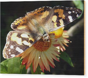Painted Lady - Pit Stop 1 Wood Print by Esther Brueggemeier