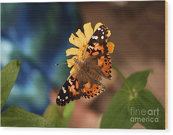 Wood Print featuring the photograph Painted Lady Butterfly by Eva Kaufman