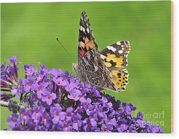 Painted Lady Butterfly On A Buddleia Wood Print by Andy Smy