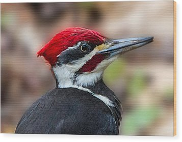 Wood Print featuring the painting Painted Pileated Woodpecker by John Haldane