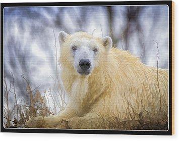 Painted Polar Bear  Wood Print by LeeAnn McLaneGoetz McLaneGoetzStudioLLCcom