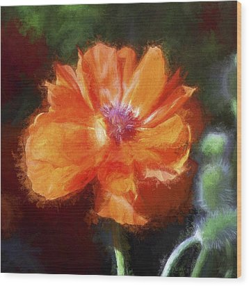 Painted Poppy Wood Print