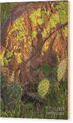 Painted Rock Wood Print by Iris Greenwell