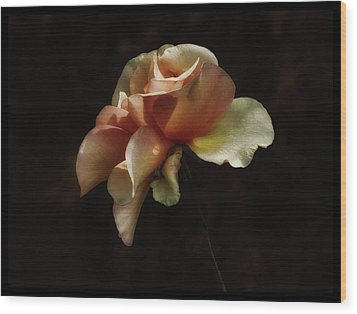 Painted Roses Wood Print by Elaine Malott