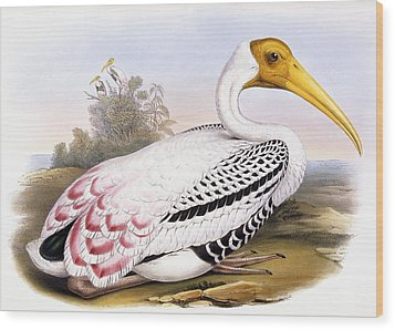 Painted Stork Wood Print by John Gould