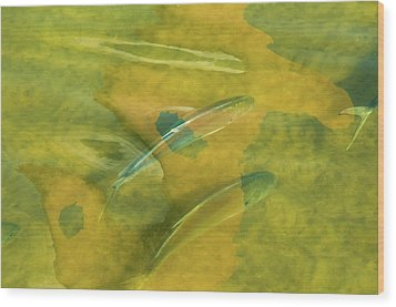 Painterly Fish Wood Print by Carolyn Dalessandro