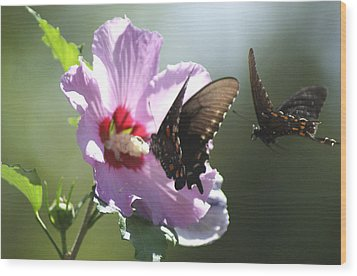 Wood Print featuring the photograph Pair Of Butterflies by Rick Friedle