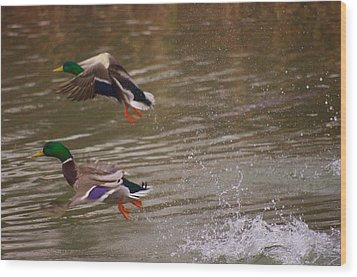 Pair Of Ducks Wood Print