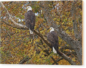Pair Of Eagles In Autumn Wood Print