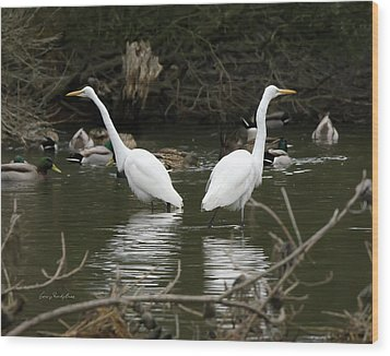 Wood Print featuring the photograph Pair Of Egrets by George Randy Bass
