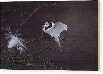 Pair Of Egrets Wood Print by Kelly Marquardt