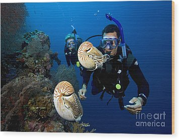 Palau Underwater Wood Print by Dave Fleetham - Printscapes