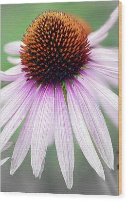 Pale Grey Wood Print by Marty Koch