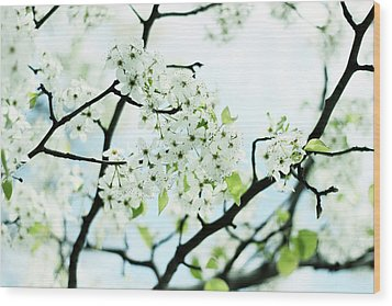 Wood Print featuring the photograph Pale Pear Blossom by Jessica Jenney